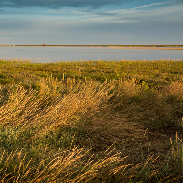 """Blakeney salt marsh"" stock image"