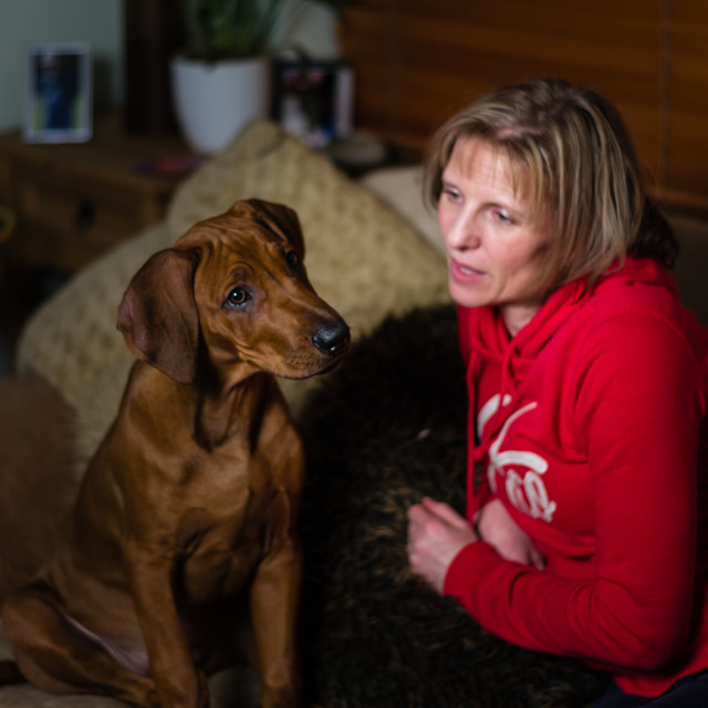 """Puppy cuddles ii -Rhodesian ridgeback puppy and mum on couch"" stock image"