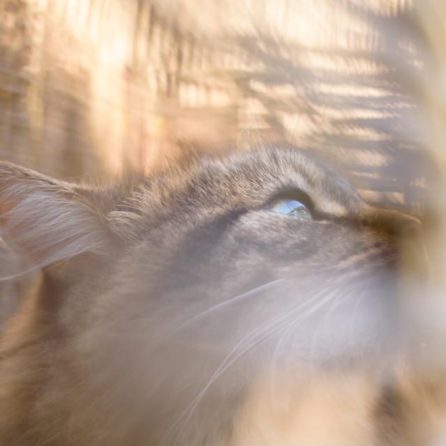 """Cat portrait in sunny basket ii"" stock image"