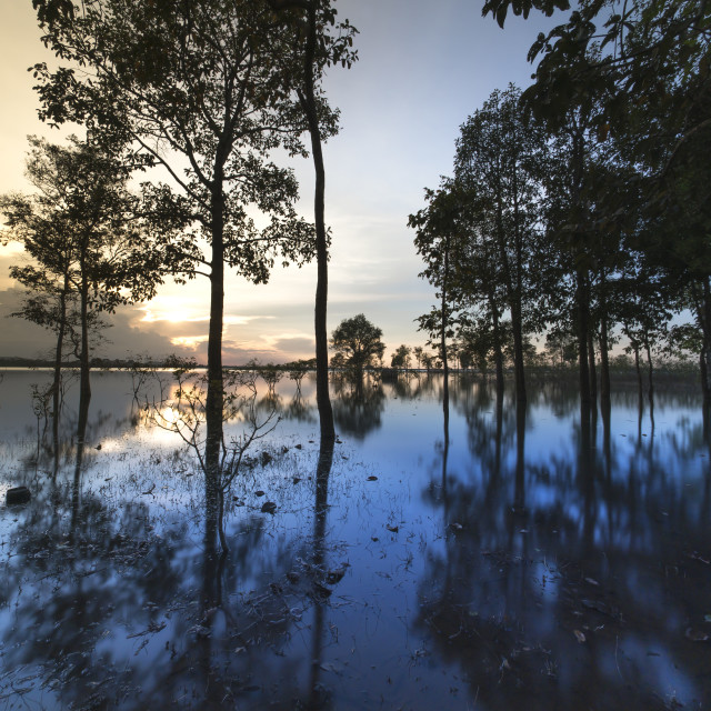 """""""Lake Eakao in Dak Lak Province, Vietnam. A row of flooded trees with their reflections in the lake at sunset"""" stock image"""