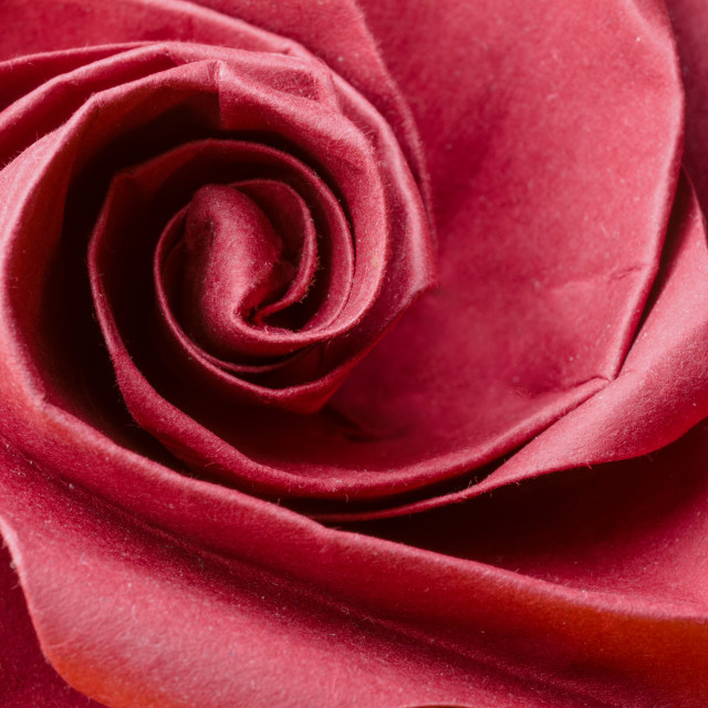"""Realistic red paper origami rose"" stock image"
