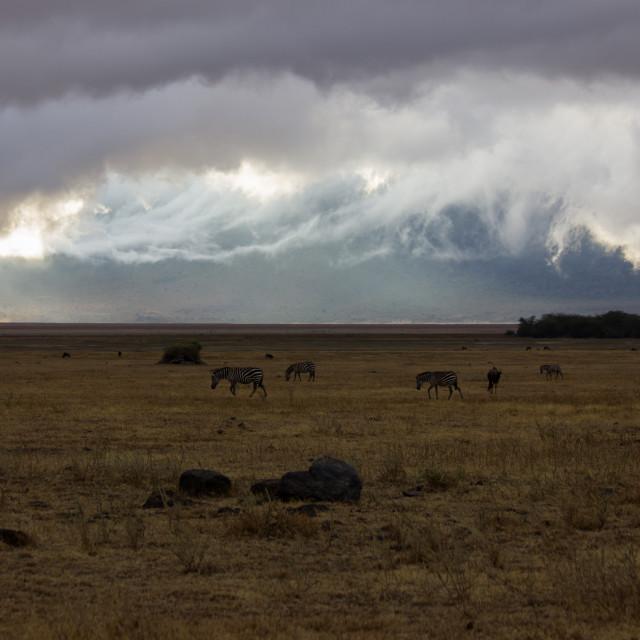 """""""Sunrise in Ngorongoro"""" stock image"""