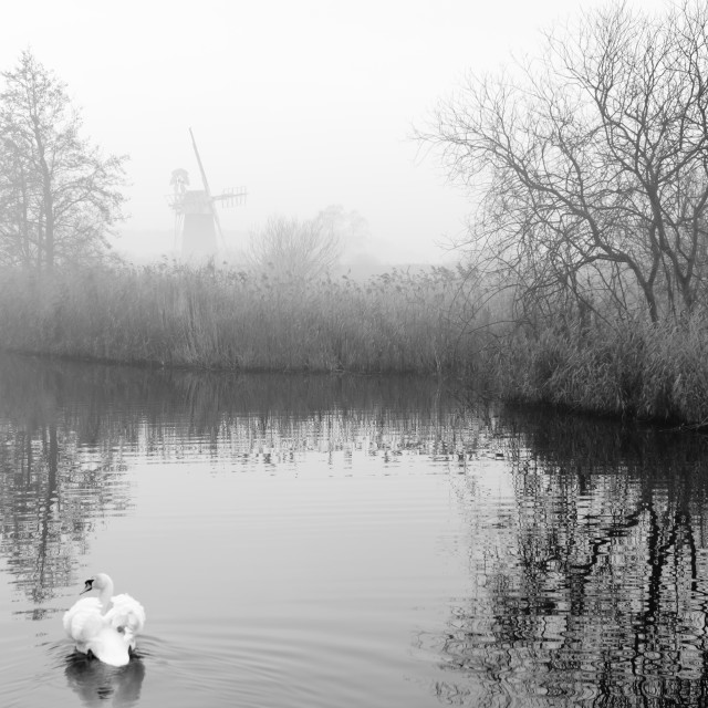 """Misty morning at How Hill mill iii- with swans"" stock image"