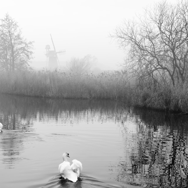 """Misty morning at How Hill mill iv- with swans"" stock image"