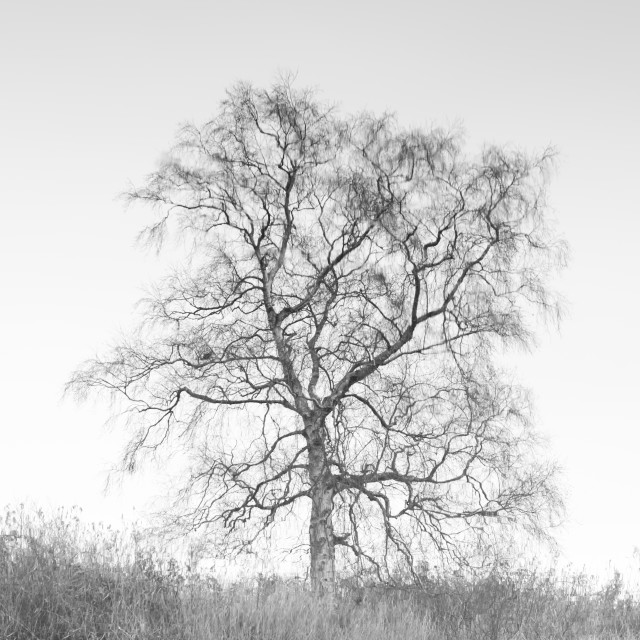 """Tree reflected, mono"" stock image"