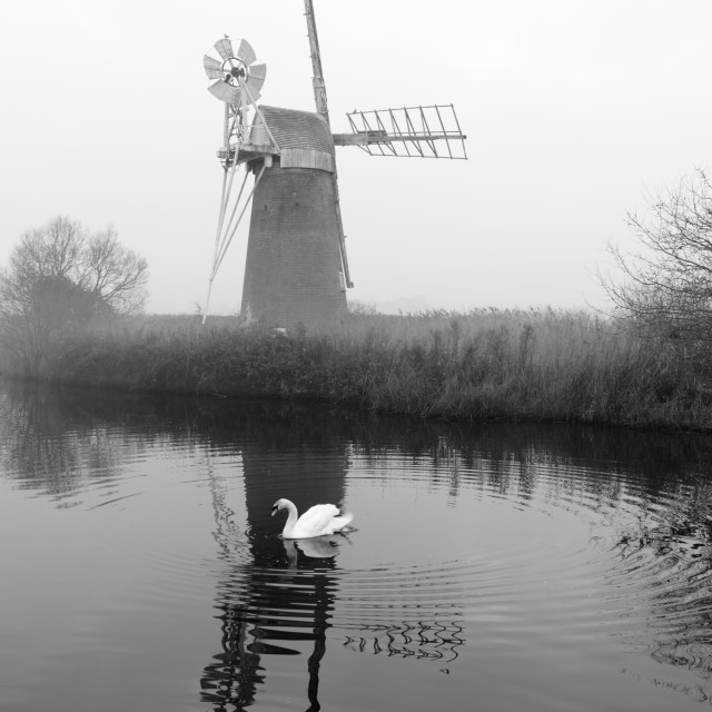 """Misty morning at How Hill mill vi- with swan"" stock image"