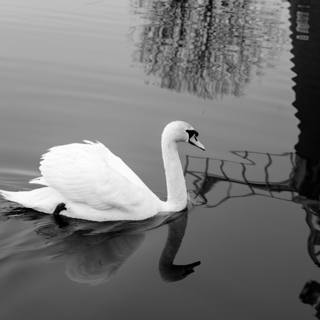 """Swan and mill reflection"" stock image"