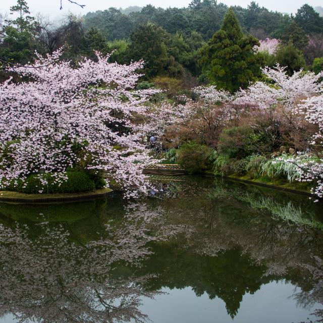 """Pink temple garden"" stock image"