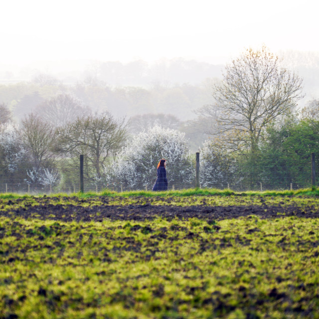 """A young woman takes an early morning walk across the fields"" stock image"