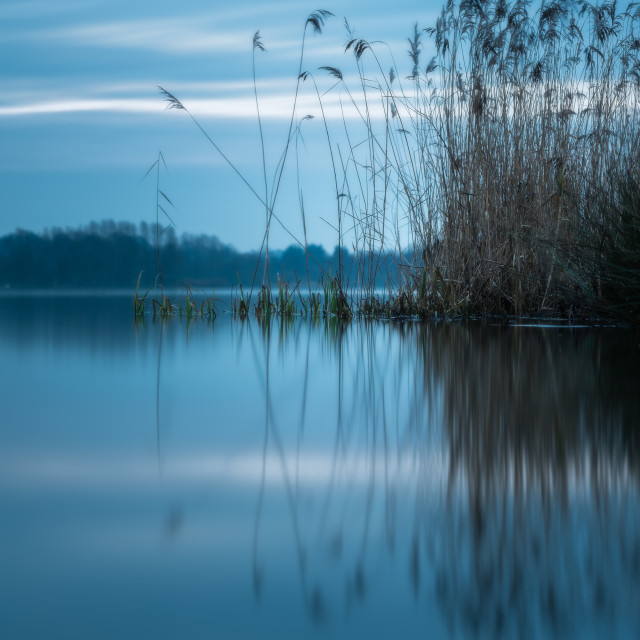 """""""Whitlingham blues. Reeds and reflections, blue tones"""" stock image"""