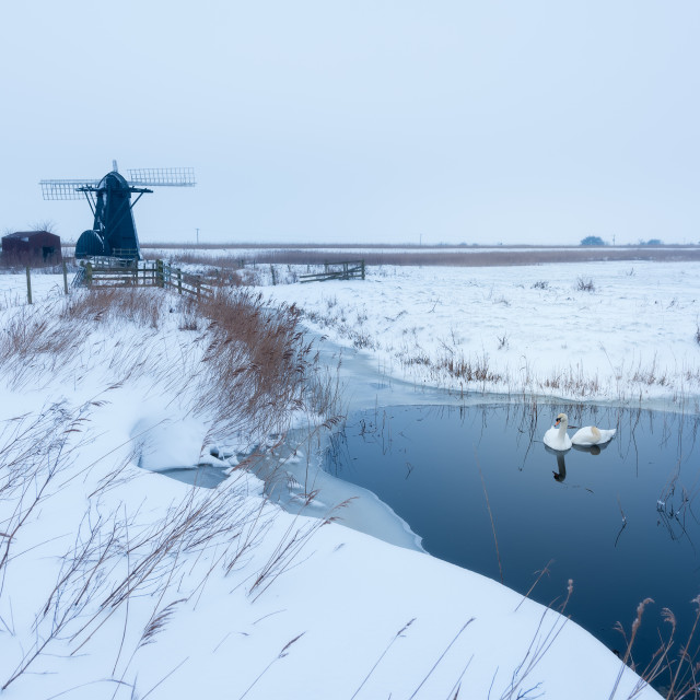 """Guardian. Snowy morning at Herringfleet Mill II. Swans in pool in front of..."" stock image"