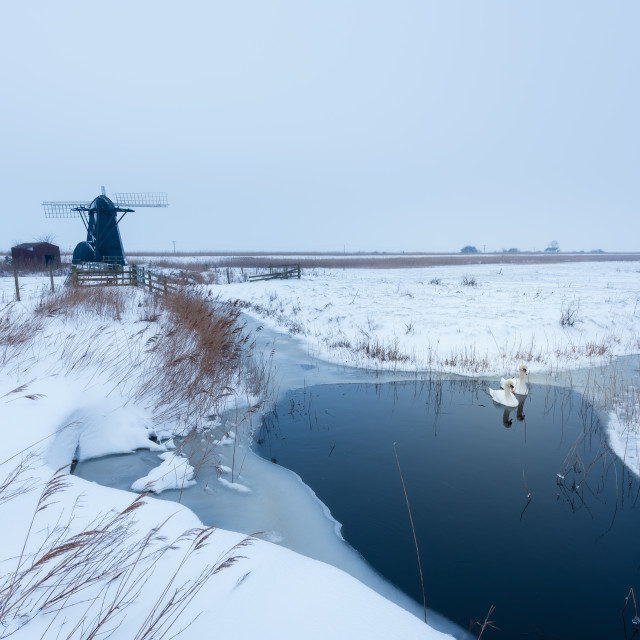 """Snowy morning at Herringfleet Mill III. Swans in pool in front of windmill,..."" stock image"