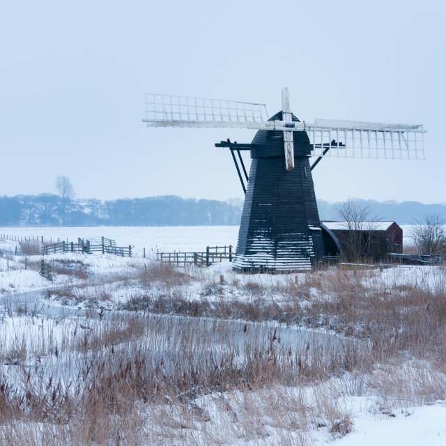 """Snowy morning at Herringfleet Mill VI. Snowy reeds and frozen creek with..."" stock image"