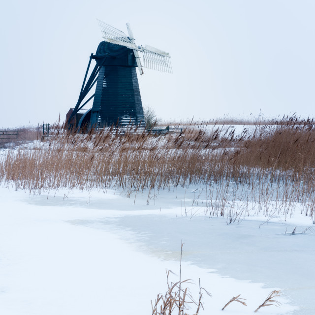 """Snowy morning at Herringfleet Mill VII. Snowy reeds and frozen creek with..."" stock image"