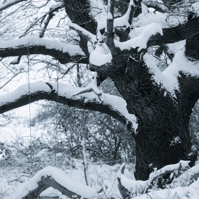 """Burden. Snowy morning at Herringfleet Mill I. Snow laden tree with swing"" stock image"