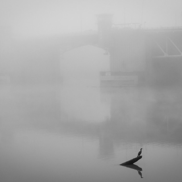 """Bird Perched on a Log in a River on a Foggy Morning"" stock image"