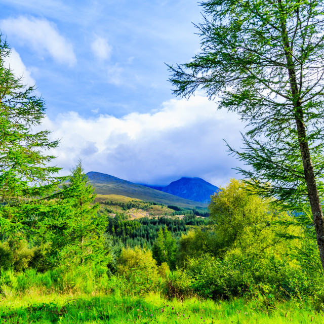 """Nevis through the Trees"" stock image"