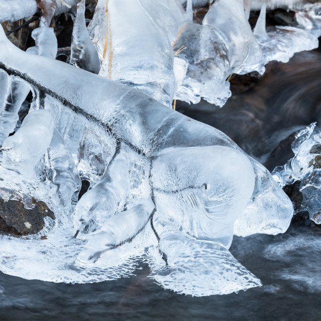 """Branch covered with ice"" stock image"