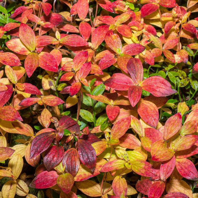 """""""Different colors on heather"""" stock image"""