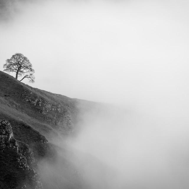 """Lone Star - Tree On Winnats Pass, Derbyshire, UK"" stock image"