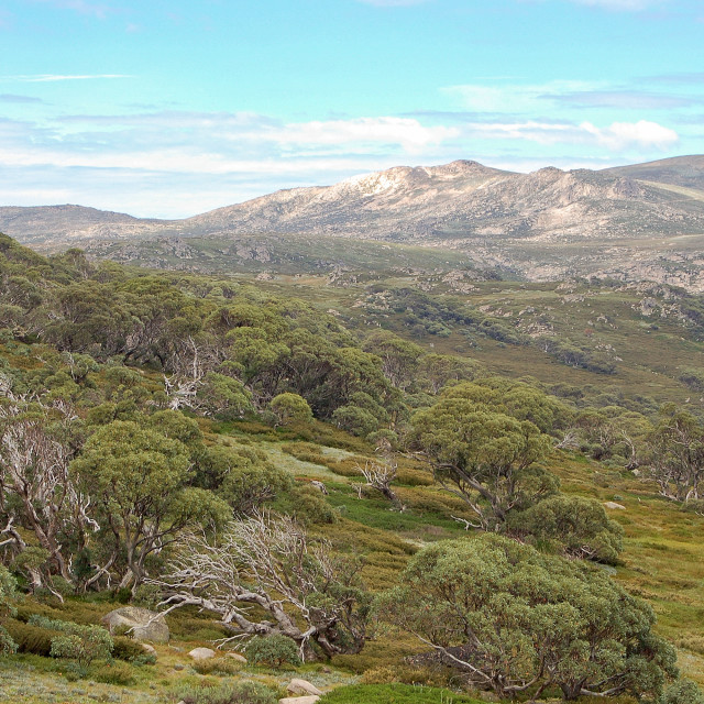 """""""View from the Charlotte Pass - Thredbo"""" stock image"""