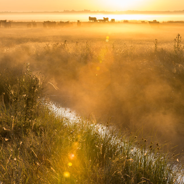 """View of coastal grazing marsh habitat at sunrise, Elmley Marshes N.N.R., Isle..."" stock image"