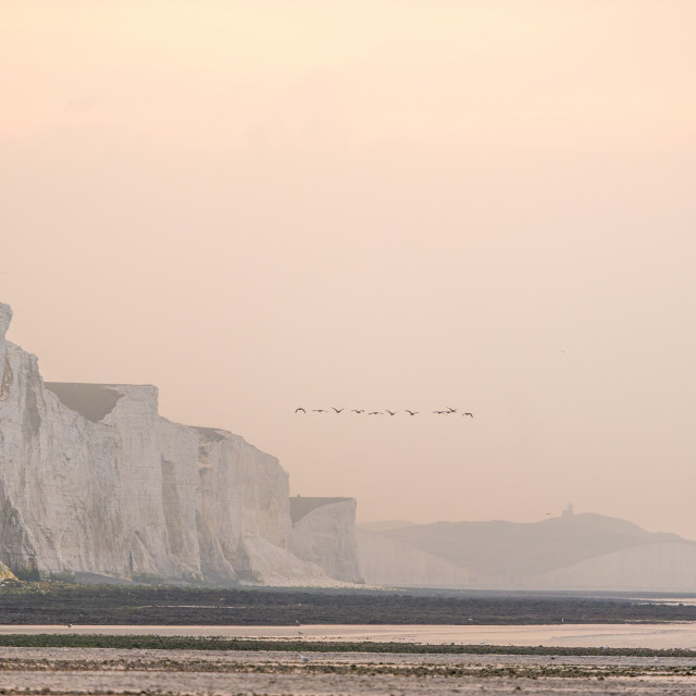 """Geese flying over the Seven Sisters in East Sussex, Cuckmere Haven,"" stock image"