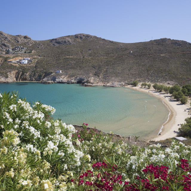 """""""View over Psili Ammos beach with oleander on island's east coast, Serifos,..."""" stock image"""