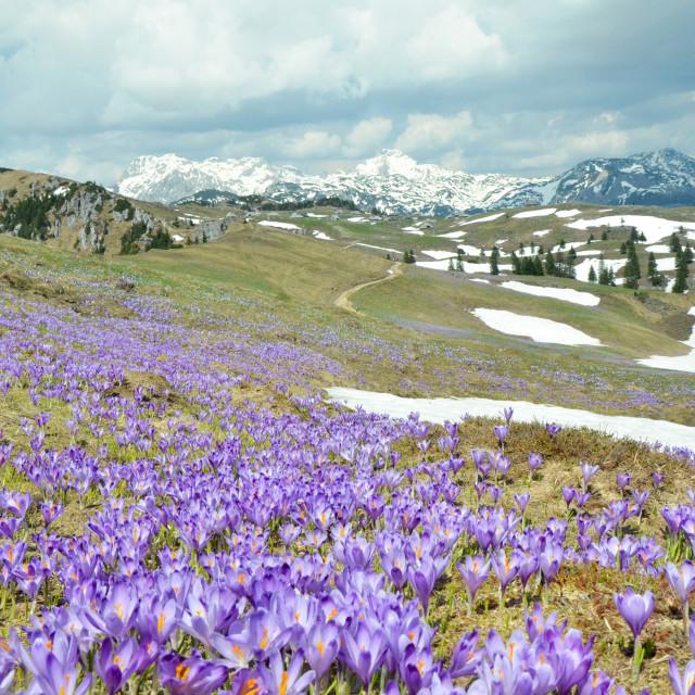 """""""Velika planina plateau"""" stock image"""