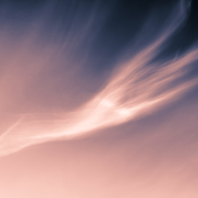 """Split Toned Pink"" stock image"
