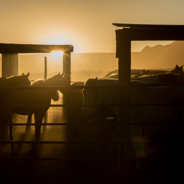 """Sunset at a Horse Stable"" stock image"