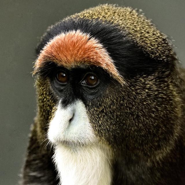 """A Monkey"" stock image"