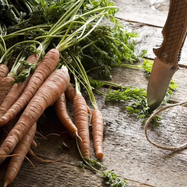 """Raw carrots with leaves"" stock image"
