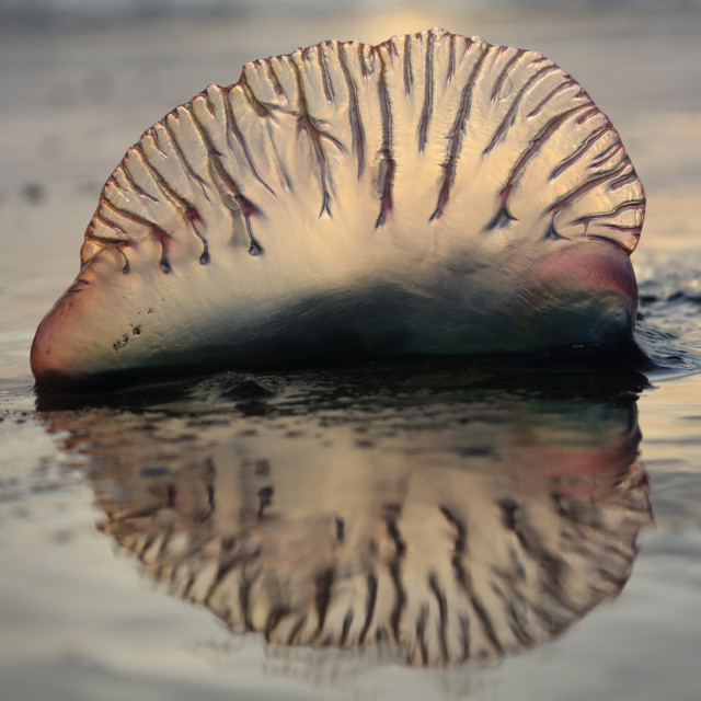 """""""Jelly Fish on a Beach"""" stock image"""