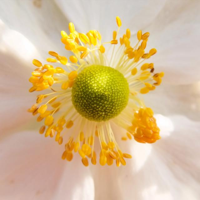 """Flower Head"" stock image"