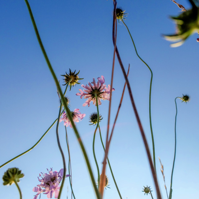 """""""Flowers and sky"""" stock image"""