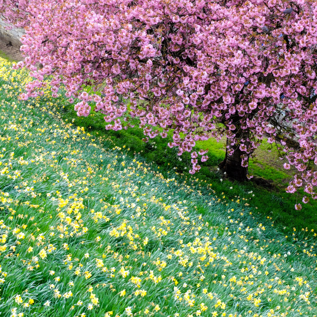 """""""Blossom Tree and flowers"""" stock image"""