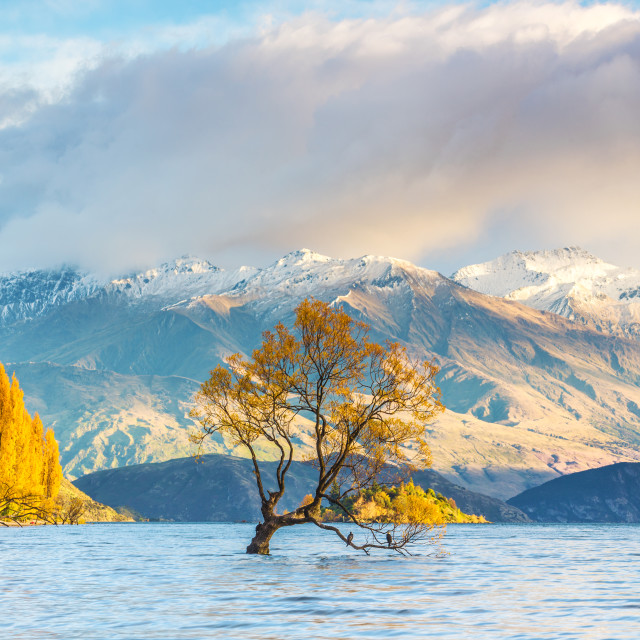 """Wanaka tree in sunrise, New Zealand"" stock image"