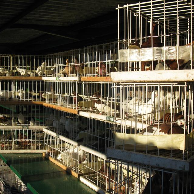 """Krakow: Pigeon Market"" stock image"