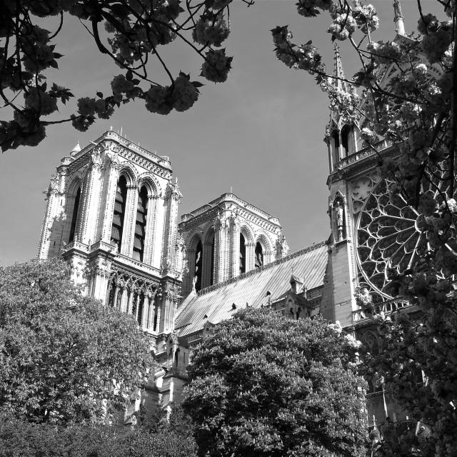 """""""Notre Dame in Springtime"""" stock image"""