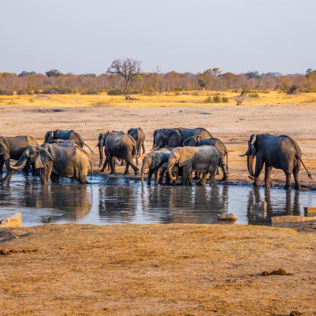 """""""Elephants gathering by a waterhole."""" stock image"""