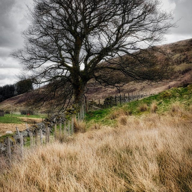 """""""Moody scenery in Central Scotland"""" stock image"""