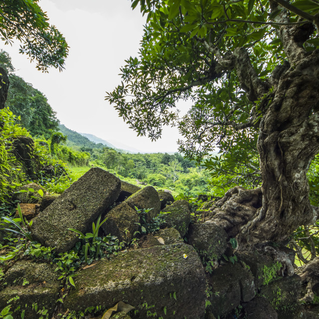 """""""Tree growing out of the ruins in the Vat Phou Temple Complex; Champasak, Laos"""" stock image"""