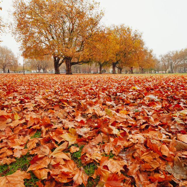 """London Fields in Autumn"" stock image"