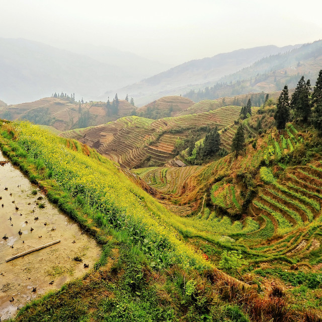 """Longji Terrace Field, Longsheng, China"" stock image"