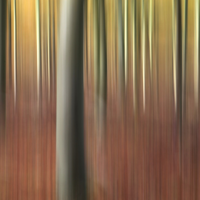 """Impressionistic view of a forest in autumn"" stock image"