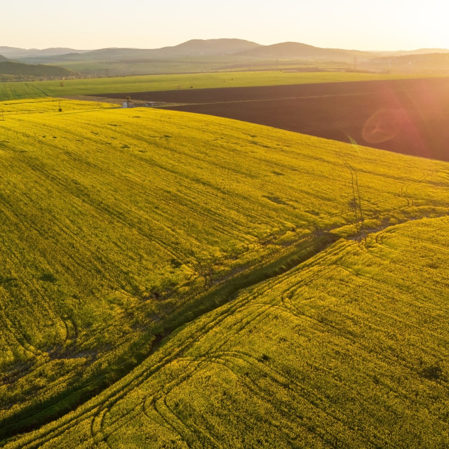 """Aerial view of rapeseed field."" stock image"