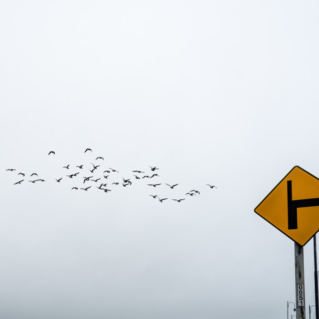 """""""Yellow directional sign and flock of birds against sky"""" stock image"""