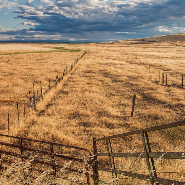 """Pasture gate at edge of a ranch field."" stock image"