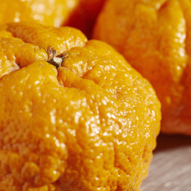 """""""Colossal Gold Nugget Tangerines, a variety from California, USA"""" stock image"""